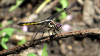 140725_2265_SX50 Dragonfly