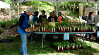 170512_3064_NX1 Herbs are Plentiful at Teatown's 2017 PlantFest