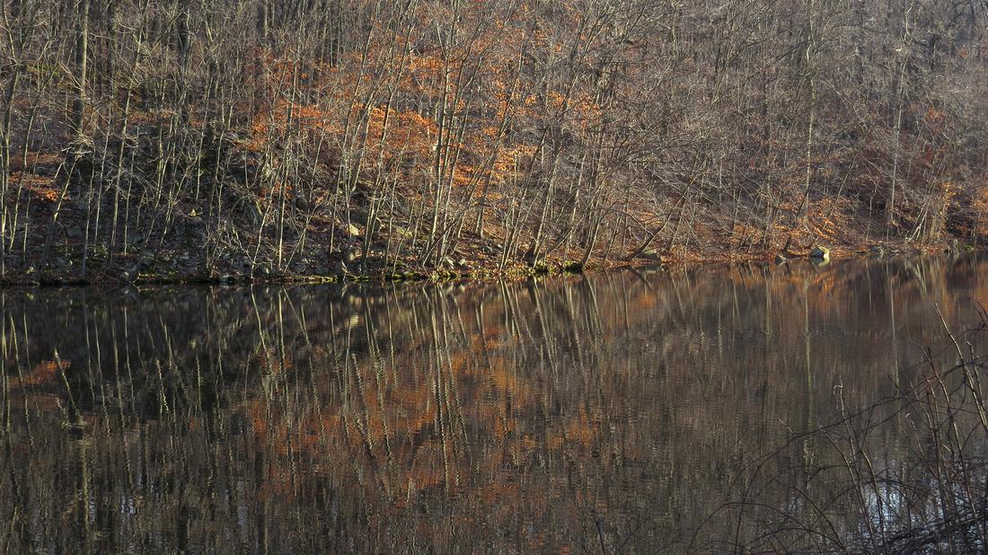 121214_0420_SX50 Swan Lake at Rockefeller Preserve