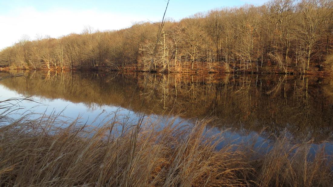 121214_0418_SX50 Swan Lake at Rockefeller Preserve