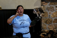 160904_2273_NX1 Teatown Environmental Educator Elissa Schilmeister with Blaze, a Female Redtail Hawk Eating Lunch on National Wildlife Day